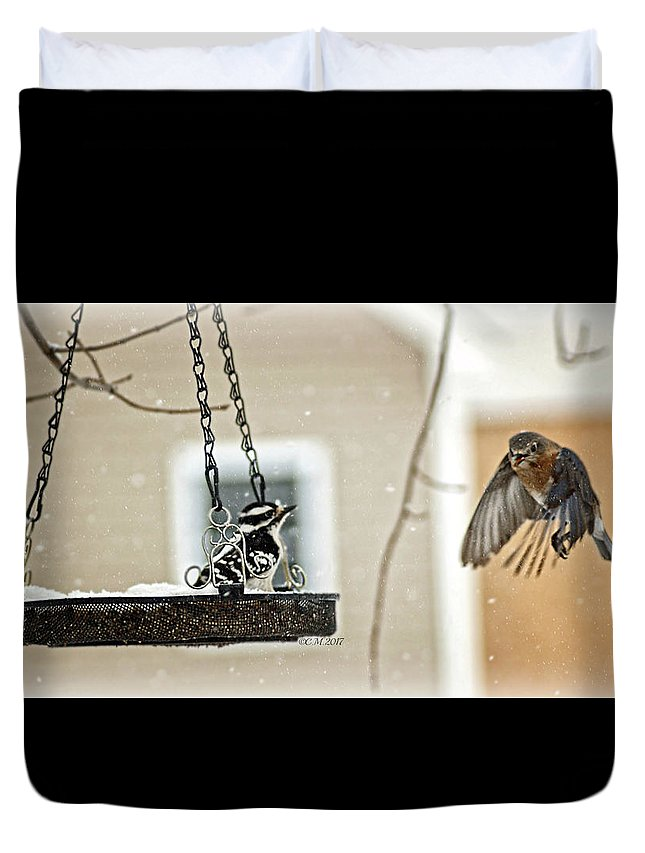 Territorial Duvet Cover featuring the photograph Confrontational by Catherine Melvin