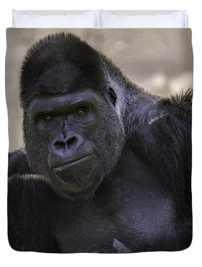 Gorilla Duvet Cover featuring the photograph Contemplation by Terry Meek