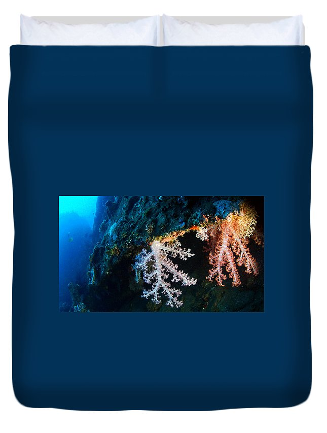 Duvet Cover featuring the photograph Contrasting Coral by Todd Hummel