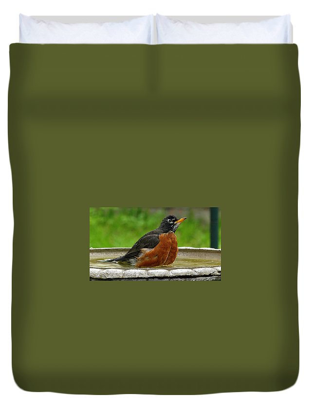 Turdus Migratorius Duvet Cover featuring the photograph Cool And Cautious by Kala King