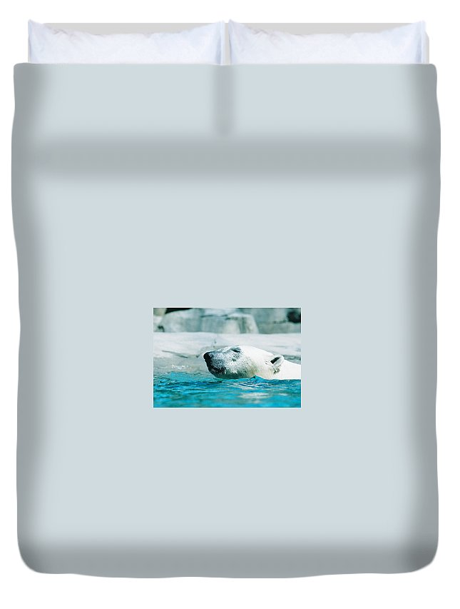 Polar Bear Duvet Cover featuring the photograph Cooling Off by Steve Karol
