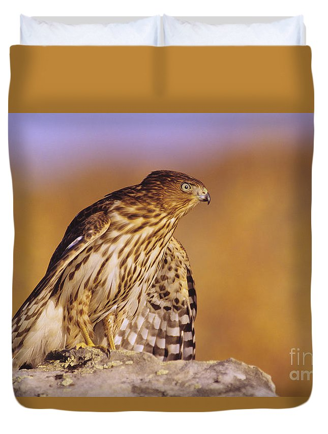 Accipiter Duvet Cover featuring the photograph Coopers Hawk by John Hyde - Printscapes