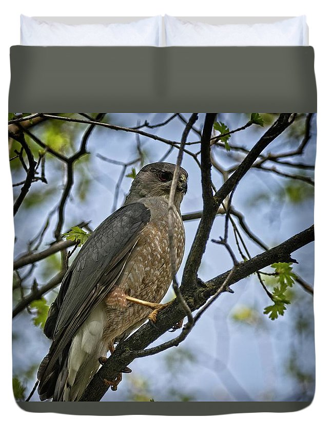 Bird Duvet Cover featuring the photograph Cooper's Hawk by Rick Graham