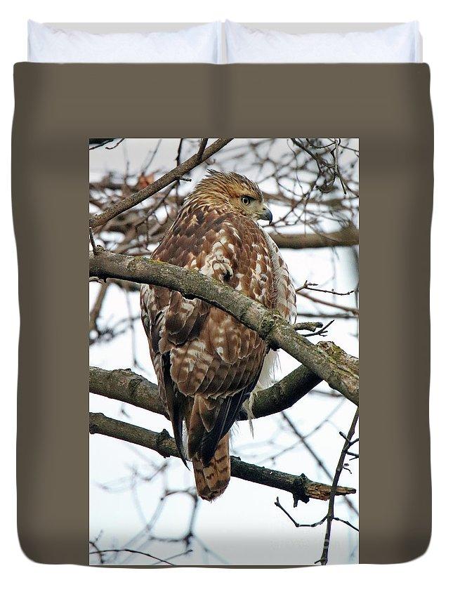 Bird Duvet Cover featuring the photograph Coopers Hawk Winter by Steve Gass