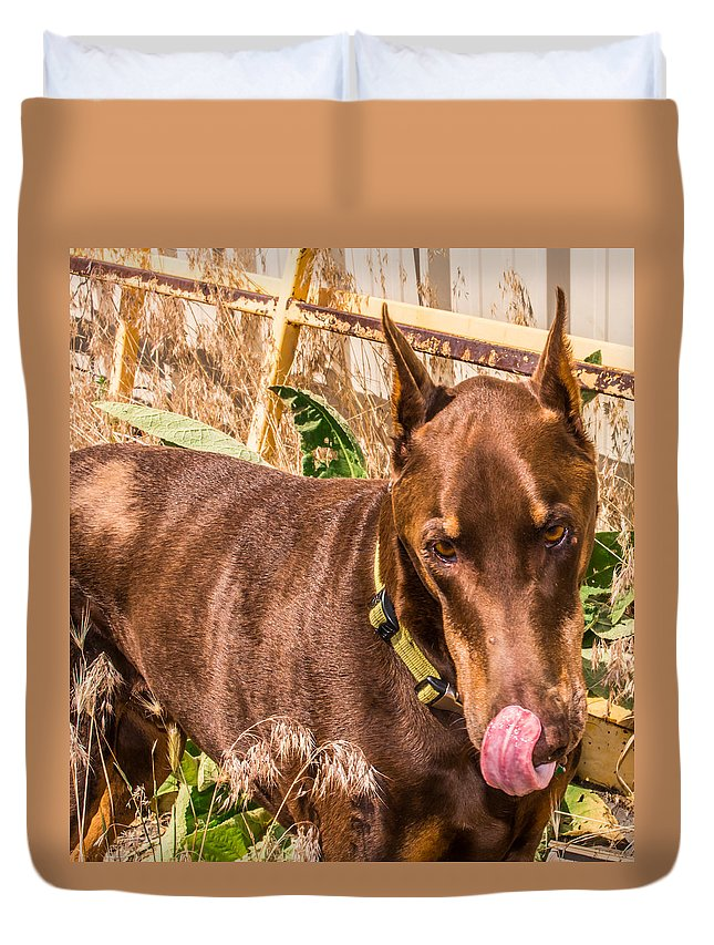 Dogs Duvet Cover featuring the photograph Copper Boy by Tammy Bryant
