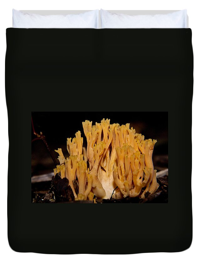Fungi Duvet Cover featuring the photograph Coral Fungi In The Forest by Douglas Barnett
