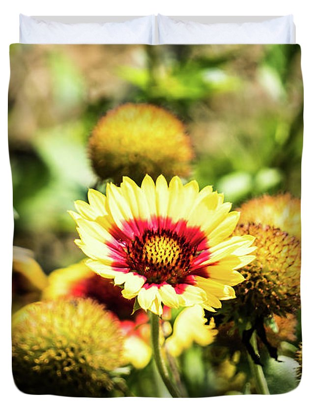 Coreopsis Duvet Cover featuring the photograph Coreopsis Tickseed by Kevin Gladwell