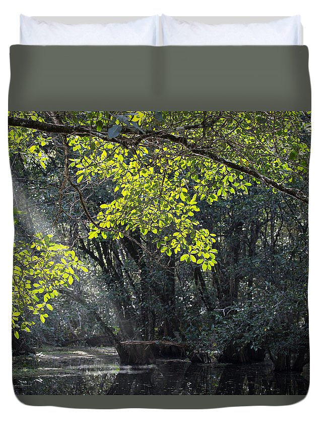 Colors Duvet Cover featuring the photograph Corkscrew Swamp - In The Autumn by J Darrell Hutto