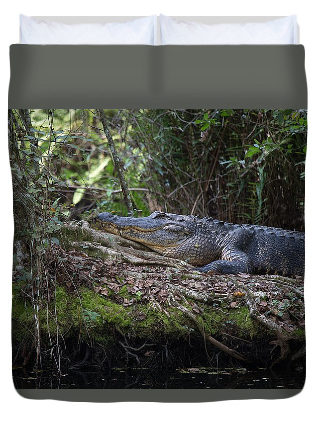 Marsh Duvet Cover featuring the photograph Corkscrew Swamp - Really Big Alligator by J Darrell Hutto
