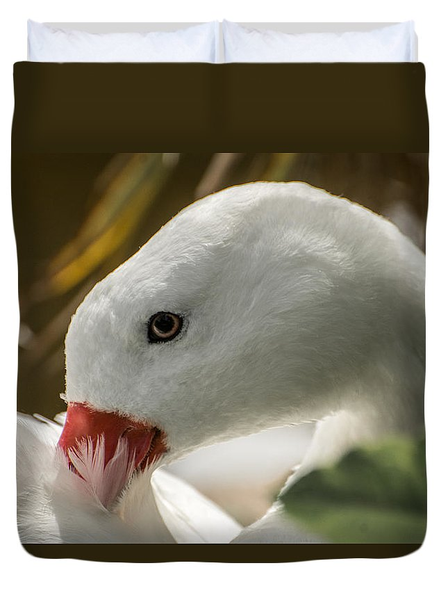 Bird Duvet Cover featuring the photograph Coscoroba Swan by Constance Puttkemery