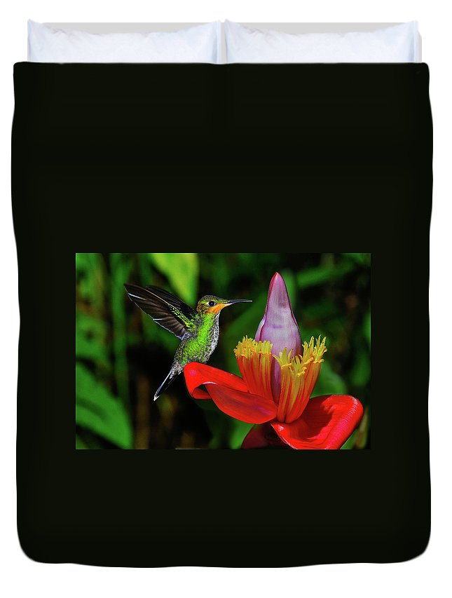 Hummingbird Photographs Duvet Cover featuring the photograph Costa Rican Hummingbird by Harry Spitz