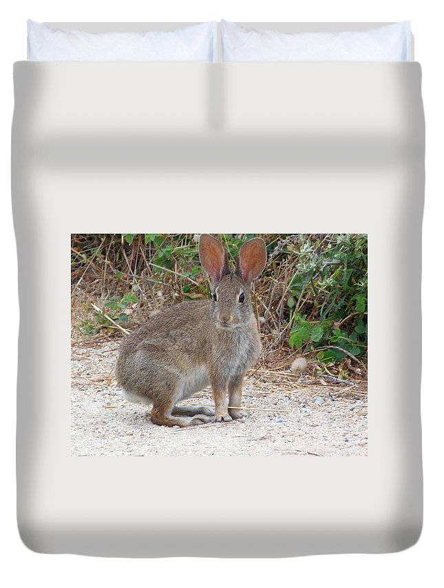 Wildlife Duvet Cover featuring the photograph Cottontail Rabbit Surprised To Have Company by Andrea Freeman
