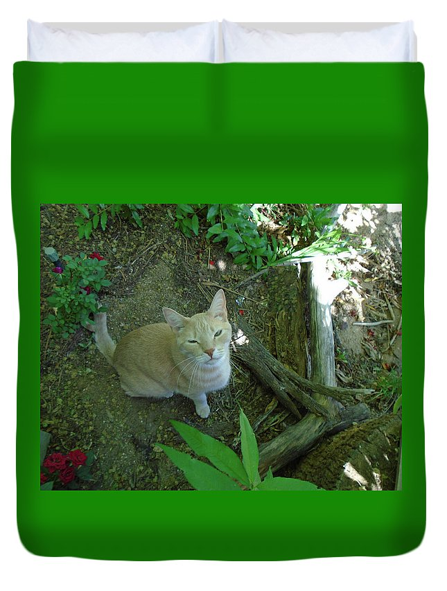 Cougar Cat Feline Woods Kitty Furry Fur Blonde Golden Playmate Puss Meow Friend Mate Play Winking Wink Looking Pr Etty Cute Fun Looking Duvet Cover featuring the photograph Cougar In The Woods by Hrabina Krystyna