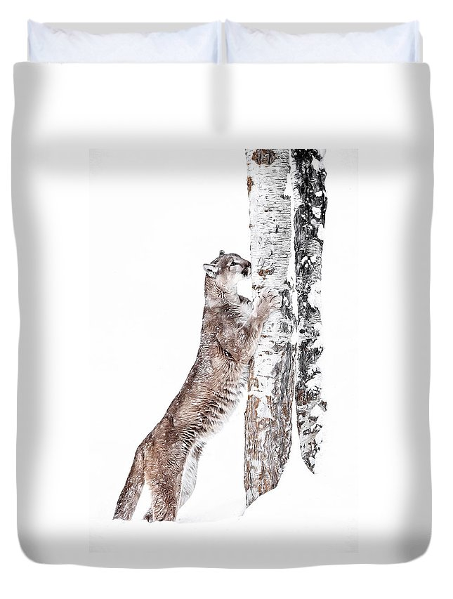 Cougars Tree Duvet Cover featuring the photograph Cougars Tree by Wes and Dotty Weber