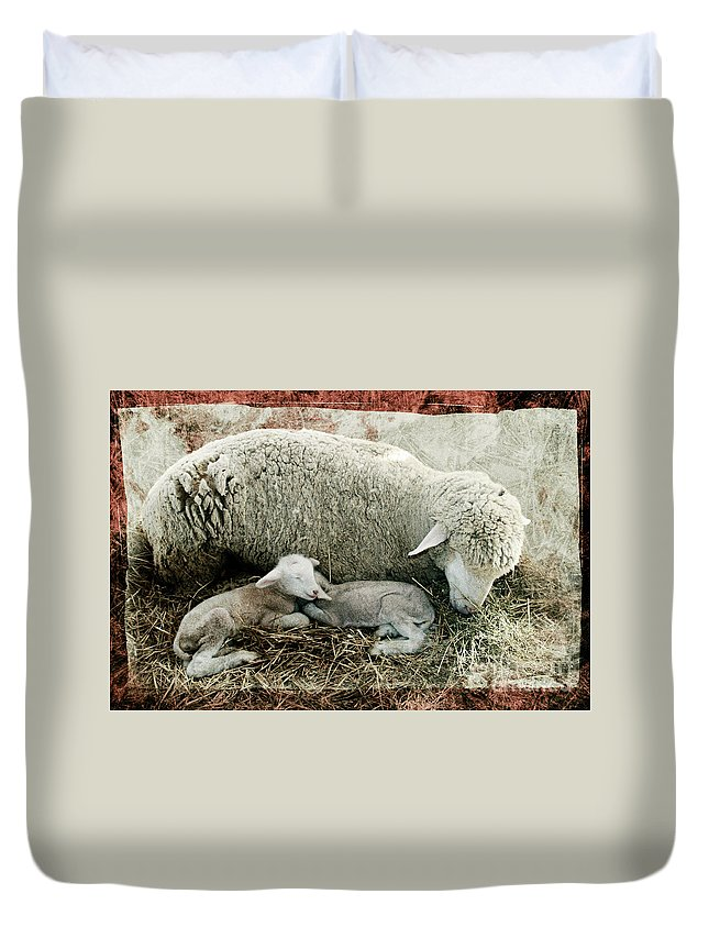 Sheep Duvet Cover featuring the photograph Counting Sheep by Sari Sauls