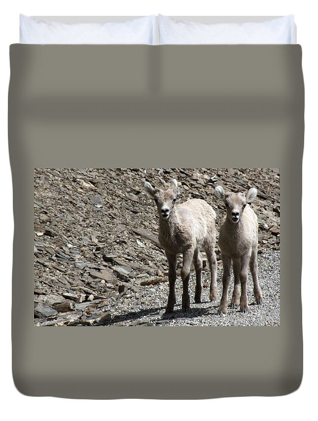 Baby Duvet Cover featuring the photograph Couple Of Cuties- Baby Bighorn by Tiffany Vest