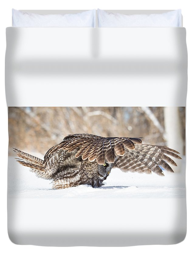 Great Grey Owl Duvet Cover featuring the photograph Cover by Michelle Lalancette