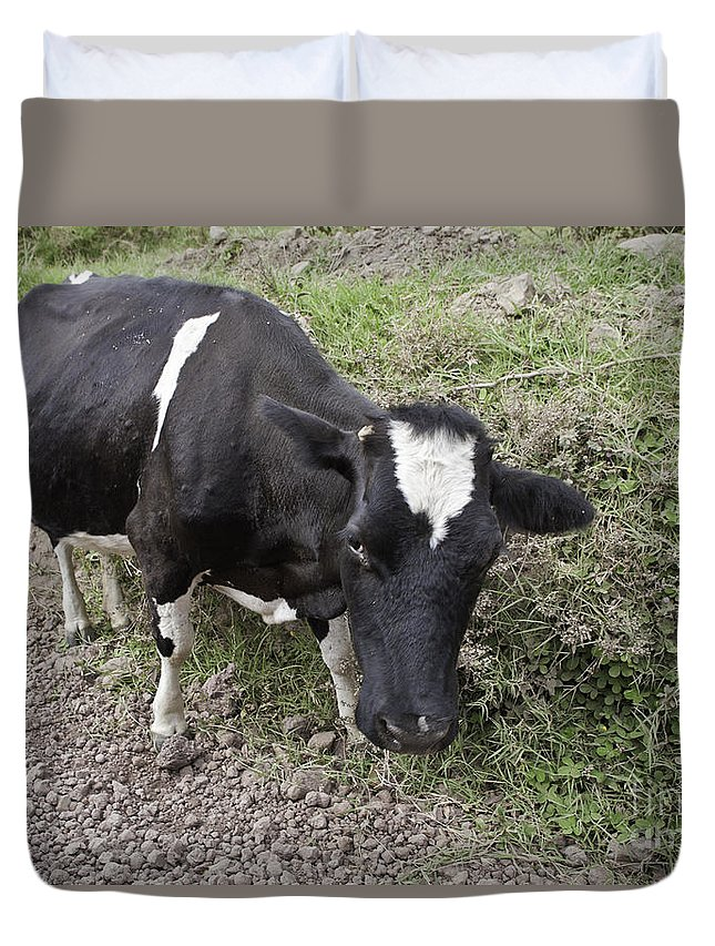 Cow Duvet Cover featuring the photograph Cow Tow by Madeline Ellis