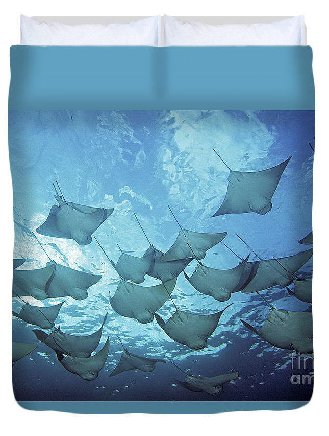 Animal Art Duvet Cover featuring the photograph Cownose Rays by Dave Fleetham - Printscapes