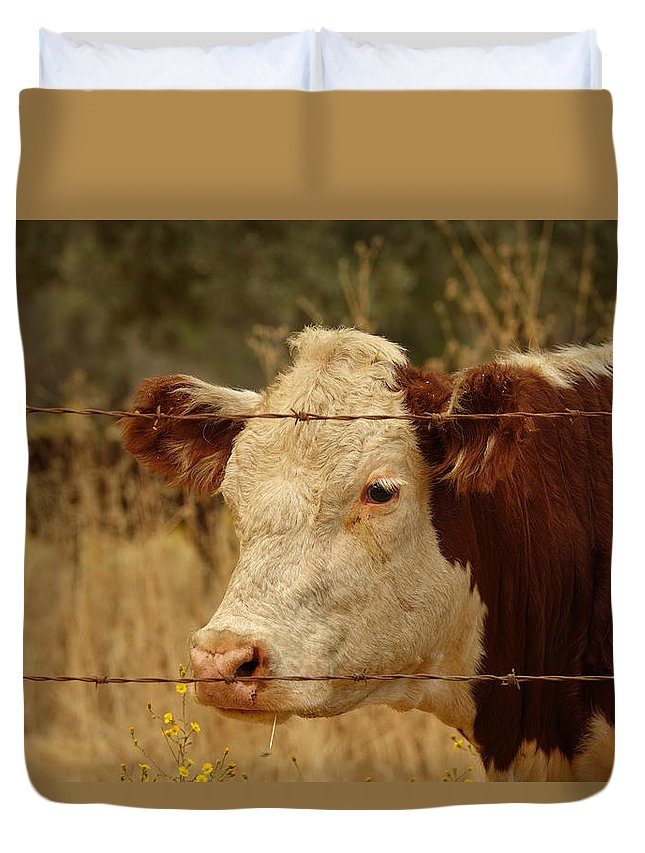 Cow Photo Duvet Cover featuring the photograph Cows by Elizabeth Waitinas