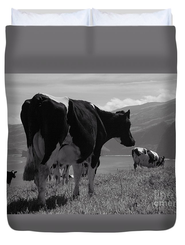 Azoren Duvet Cover featuring the photograph Cows by Gaspar Avila