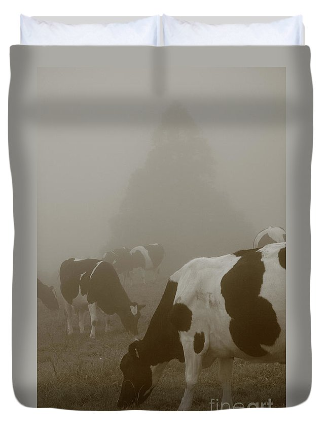 Animals Duvet Cover featuring the photograph Cows In The Mist by Gaspar Avila