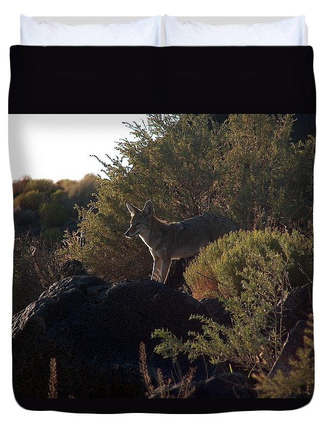 Coyote Duvet Cover featuring the photograph Coyote At The Petrogyphs 2 by Tim McCarthy