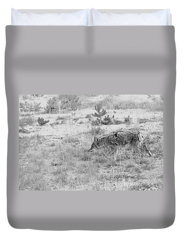 Coyote Duvet Cover featuring the photograph Coyote blending in by Alexandra Till