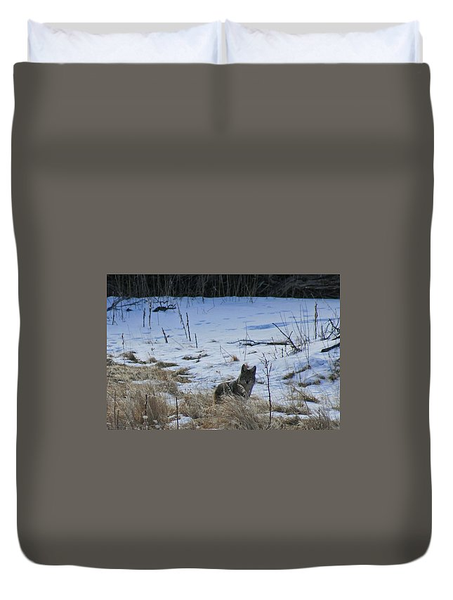 Winter Duvet Cover featuring the photograph Coyote Food Hunting by Judithann O'Toole