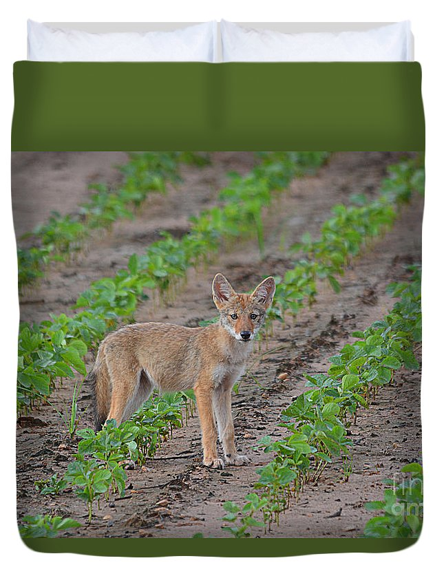 Coyote Duvet Cover featuring the photograph Coyote Pup by Deanna Cagle