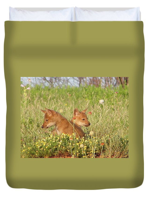 Pup Duvet Cover featuring the photograph Coyote Pups by Gale Cochran-Smith