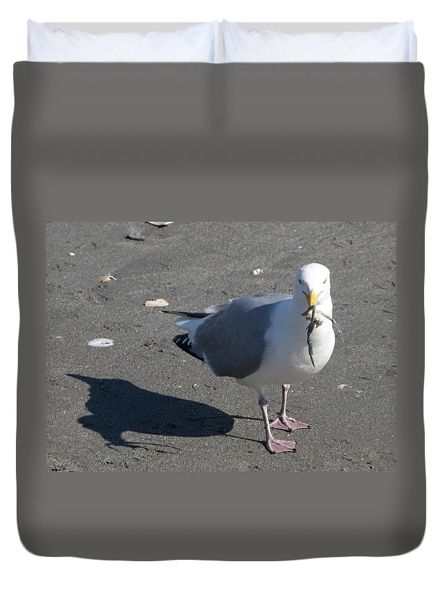 Seagull Duvet Cover featuring the photograph Crab Plate by Steven Natanson