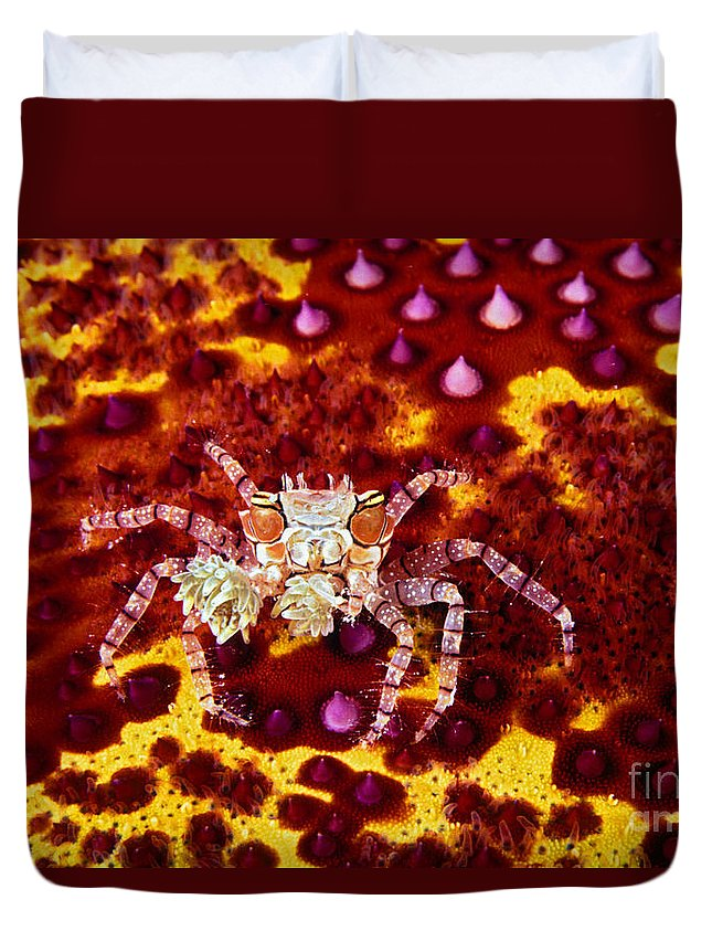 Animal Art Duvet Cover featuring the photograph Crab Underwater by Dave Fleetham - Printscapes