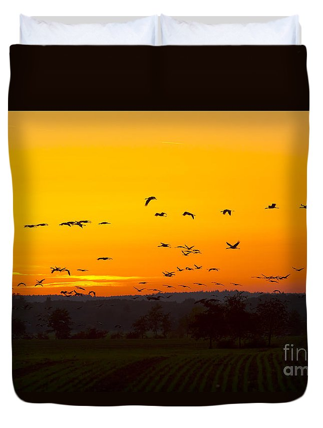 Cranes Duvet Cover featuring the photograph Cranes In The Evening by Steffen Krahl