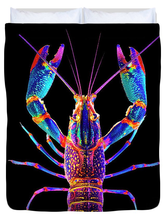 Poster Digital Art Greeting Cards Postcard Paintings Drawings Design Collage Assemblage Vivid Colors Bright Crawfish Langusta Langosta American Lobster Sea Aquarium Aqua Tropical Seafood Duvet Cover featuring the mixed media Crawfish Inthe Dark Allsat by Baptiste Posters