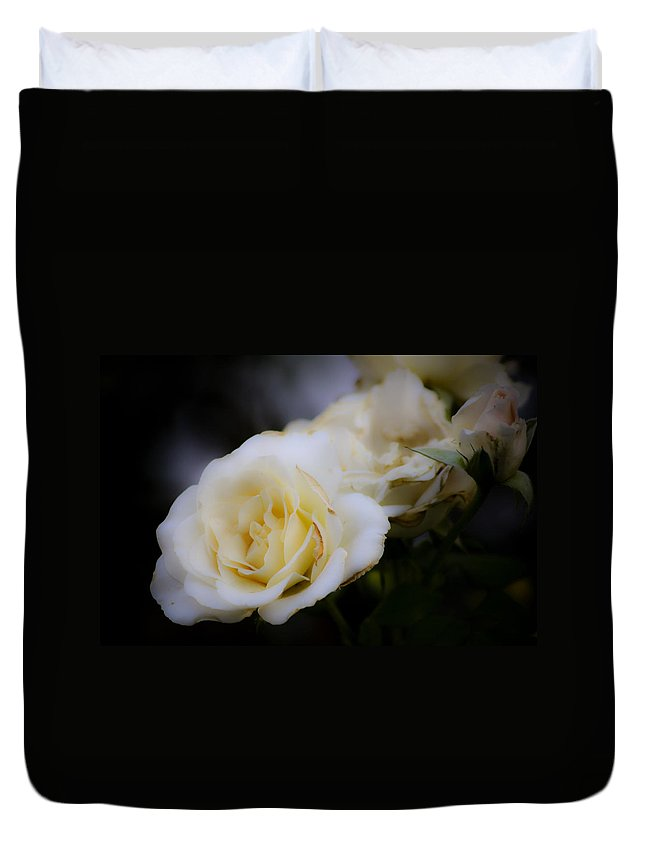 Rose Duvet Cover featuring the photograph Creamy Dreamy Rose by Teresa Mucha