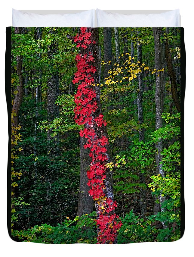 Fall Foliage This Year In Great Smoky Mountains National Park In Tennessee And North Carolina Was Spectacular; The best In Years Some Said. Of All The Blazing Colors In The Park Duvet Cover featuring the photograph Crimson Creeper by Steve Luther
