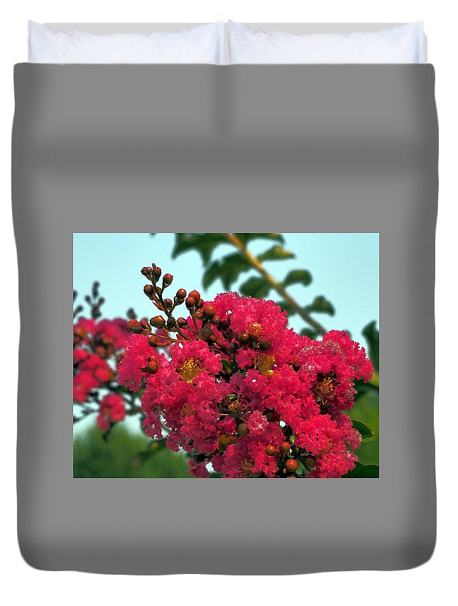 Botanical Duvet Cover featuring the photograph Crimson Jacaranda Blooms by Richard Thomas