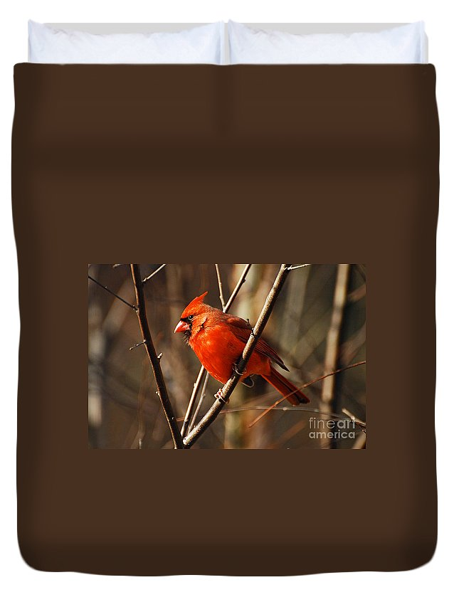 Wildlife Duvet Cover featuring the photograph Crimson King by Lois Bryan
