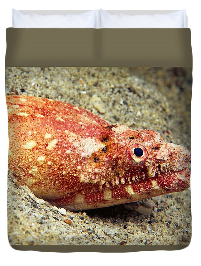 Ambush Duvet Cover featuring the photograph Crocodile Snake Eel by Dave Fleetham - Printscapes
