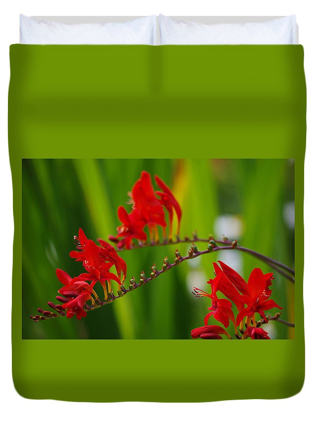 Crocosmia Duvet Cover featuring the photograph Crocosmia by Kat J