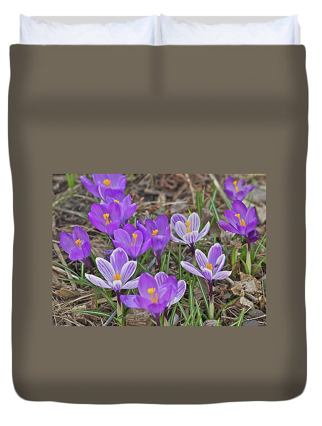 Crocus Duvet Cover featuring the photograph Crocuses 5 by Michael Peychich