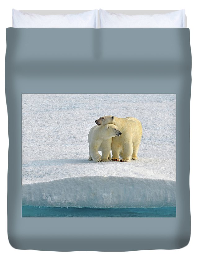 Polar Bear Duvet Cover featuring the photograph Crossing by Tony Beck