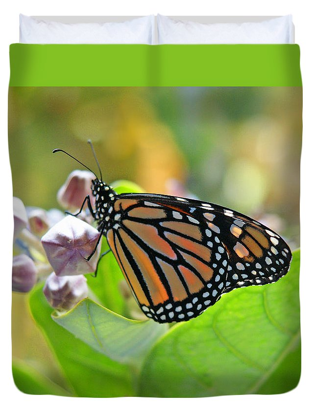 Monarch Butterfly Duvet Cover featuring the photograph Crown Room by Kevin Smith