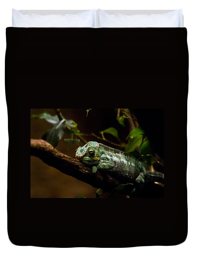 Chameleon Duvet Cover featuring the photograph Crummy Day by Douglas Barnett