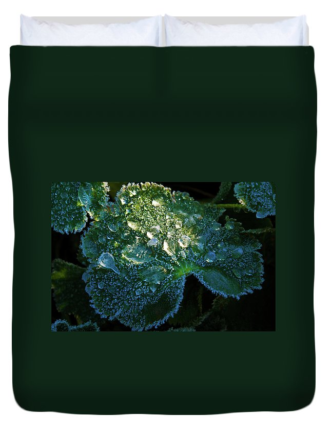 Crystal Duvet Cover featuring the photograph Crystal Lady's Mantle by Douglas Barnett