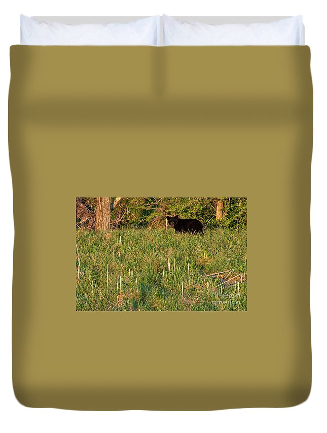 Cades Cove Duvet Cover featuring the photograph Cub Scout by Bob Phillips