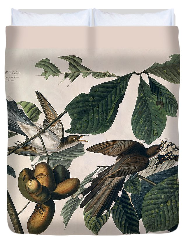 Yellow-billed Cuckoo Duvet Cover featuring the drawing Cuckoo by John James Audubon