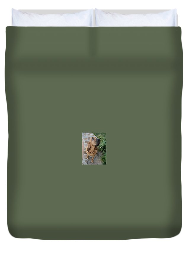 Bloodhound Duvet Cover featuring the photograph Cujo Looking At A Butterfly by Val Oconnor