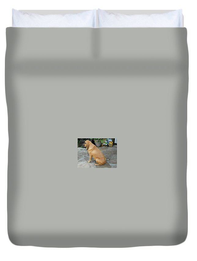Bloodhound Duvet Cover featuring the photograph Cujo Sitting Around by Val Oconnor